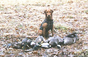 Sadie, for a little gal she can realy haul in the birds. Just look at that and ready for more.